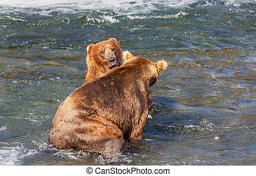 Bear on Alaska - Grizzly bear on Alaska