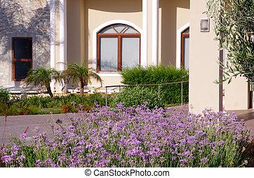Purple flowers in an urban flowerbed