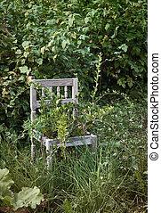 Old wooden chair in wild garden - Old wooden chair in wild...