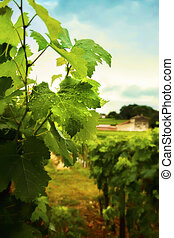 France country side - country side with wine plants