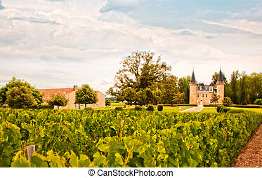 wine France landscape - wine landscape in France with castle...