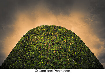 Formal Garden - Close-up of top of topiary in a formal...