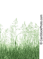 Abstract Meadow Grass Background Isolated