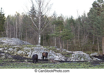 rural scene in norway with two horses