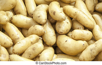 White organic potatoes from a green farm for background