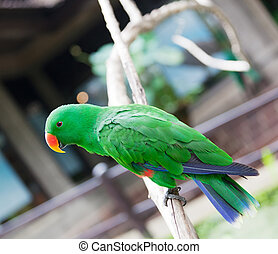 bright green parrot sits on a branch