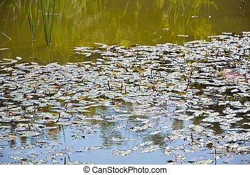 Water on pond