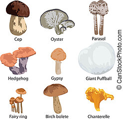 set of edible mushrooms - collection of edible mushrooms on...