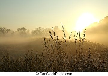 Sunrise over the misty meadow