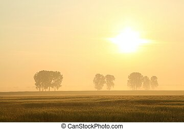 Sunrise over the field with trees surrounded by mist