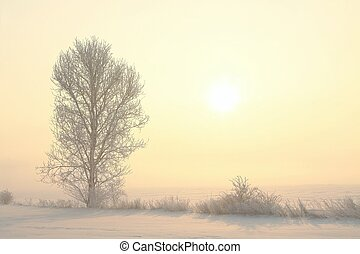 Winter landscape at sunrise - Frosted trees in the field on...