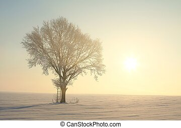 aube, arbre, hiver
