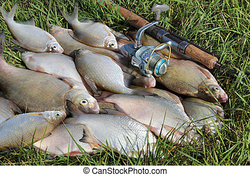 fishing catch - bream - fishing catch on the grass and...