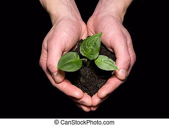 土壌, 苗木, 保有物, 手