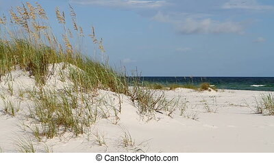 Gulf Of Mexico Dunes - Gentle breeze moves the sea oats...