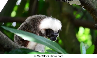 a small tamarin on a tree branch