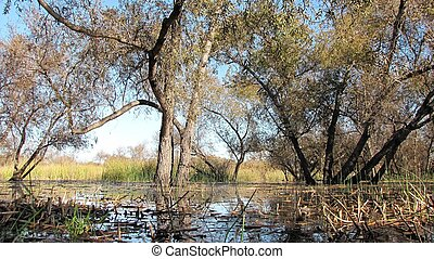 Madrona Marsh Revisited - Trees and vegetation in a marsh,...