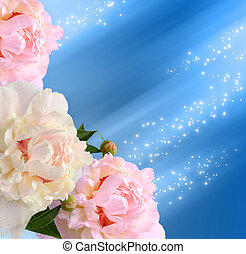 Peonies on the blue background