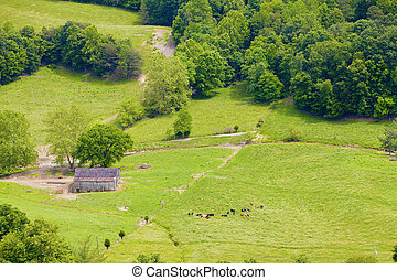 Farmland - Bird's eye view of farmland and cattle
