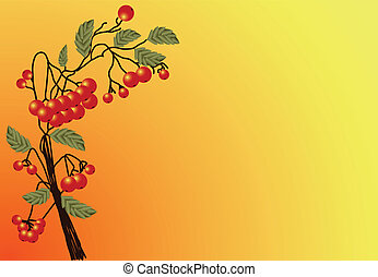 Red Rowan - Illustration of ripe red Rowan twigs with leaves...
