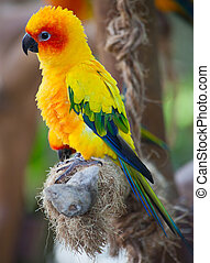 aratinga parrot in the aviary