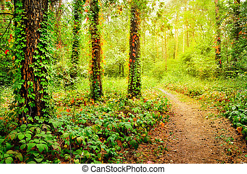 Beautiful trail in the forest - Beautiful foot path in the...