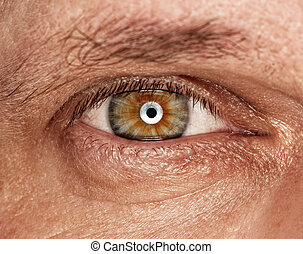 Picture of a human eye