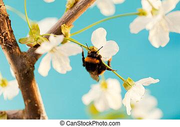 bumble, abeja, flor