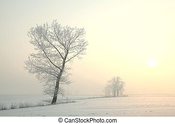 Frosty winter tree at dawn - Frosty winter tree standing...