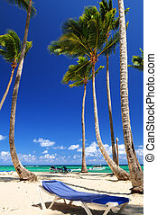 Sandy beach on Caribbean resort with tall palm trees