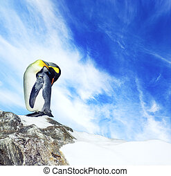 Picture of a penguin