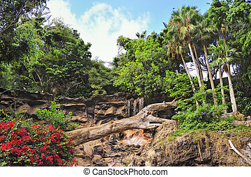 Picture of a tropical background