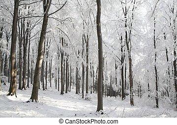 Haya, helado, invierno, día, bosque