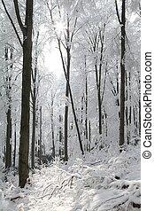 Haya, bosque, helado, invierno, día