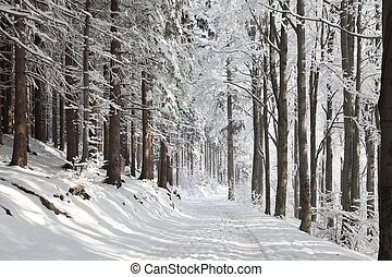 Winter forest path on a sunny day - Winter lane among...