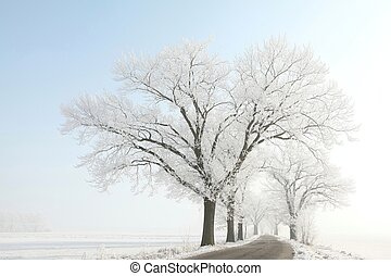 Trees on a sunny winter morning