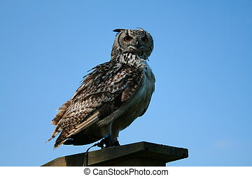 Wise Owl - Wise owl on a perch