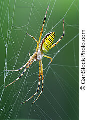 spider - a spider insects networks photography