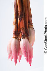 Ginger flower or Torch Ginger Bud on background - Ginger...