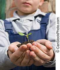 plant  - The boy holds a little plant in hands