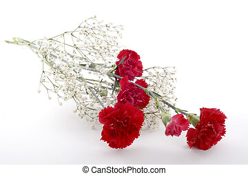 Cut Long-Stem Carnations - Long stemmed red carnations...