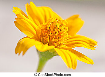 The Closeup of yellow  flower