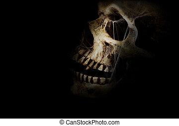 Dark Skull - Human skull with spider webs against a black...