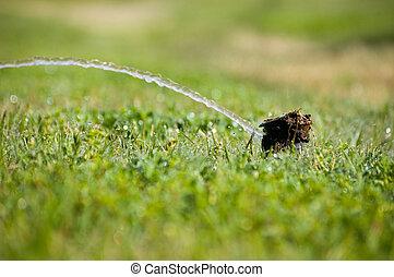Lack of Effeciency - A broken sprinkler head barely pushing...