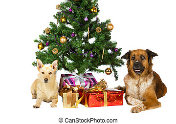 Happy dogs under the Christmas tree - Two happy dogs lie...