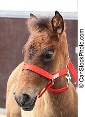 Young horse with red bridle
