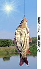carp on a fishing hook on sky and river  background