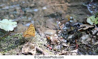 butterfly standing near water