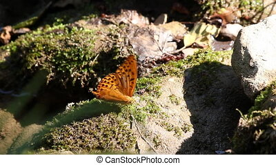 butterfly standing on rock