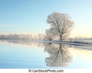 aube, arbre, hiver, paysage